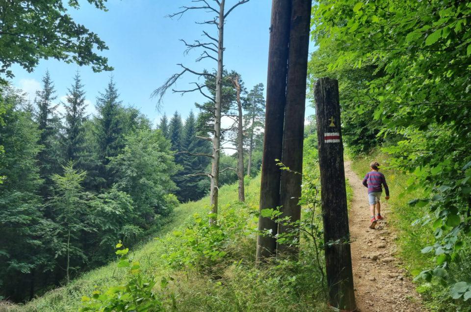 Międzygórze, wodospad Wilczki i Góra Igliczna